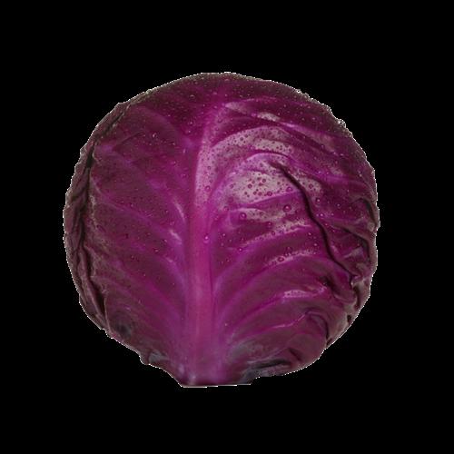 Økologisk rødkål