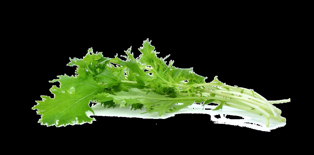 Øko spicy mizuna salat