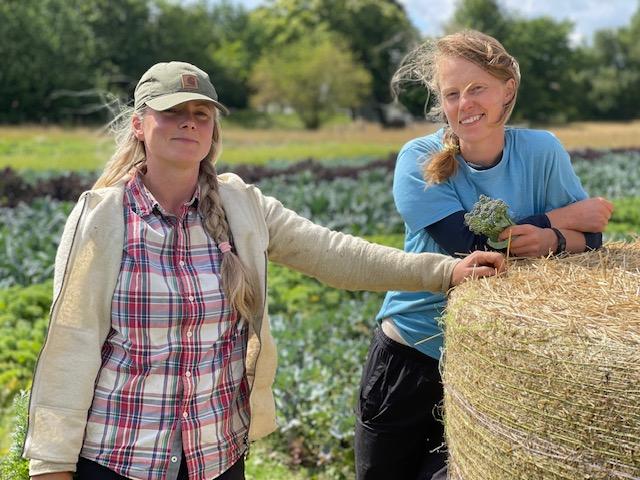 Drys: Grøntsags- og urteparadis